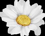 Cópia de flor 1_edited.png