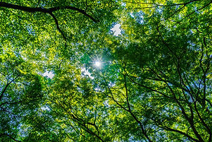 beautiful-green-tree-leaf-forest-with-su
