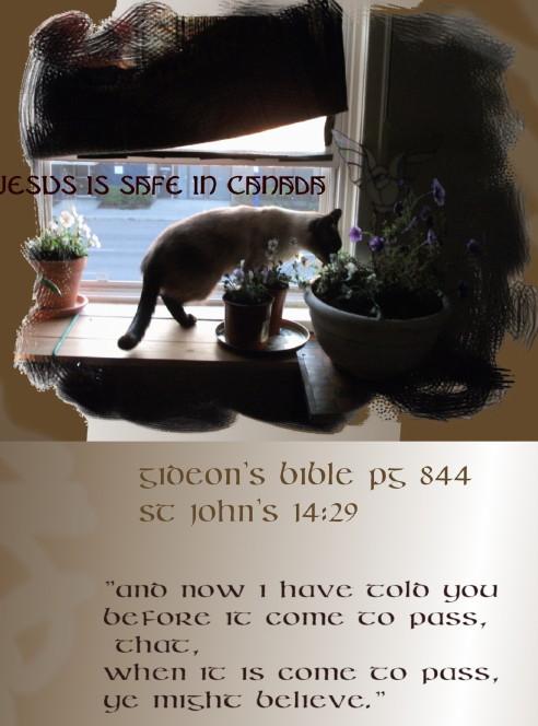 kitty flowers st john 14 29 page - Copy.