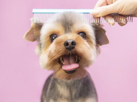 7 Reasons Why Regular Pet Grooming is So Important