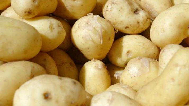 Pommes de terre bio, origine Vendée - 1kg