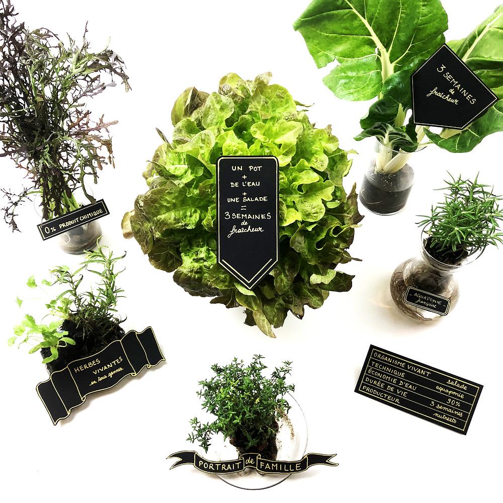 Aquaponie Végétaux