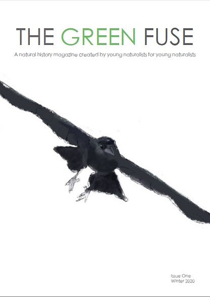 THE GREEN FUSE MAGAZINE Issue 1 Winter edition is here!