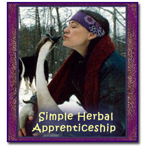 Simple Herbal Apprenticeship