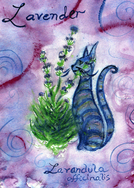 Lavender Cat by Kathy Crabbe