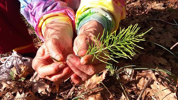 herbs-wixsite.jpg