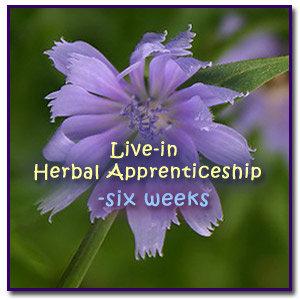 Live-in Herbal Apprenticeship-six weeks
