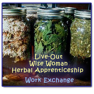 Live-Out Wise Woman Herbal Apprenticeship-Work Exchange