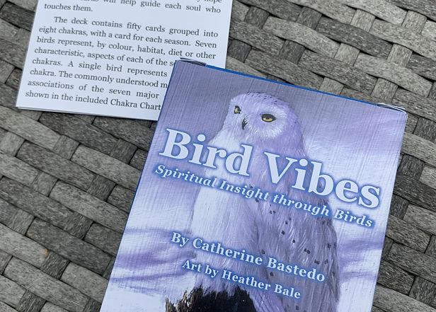 birdvibes-4.jpg