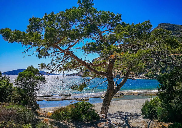 Samos beach view with a tree