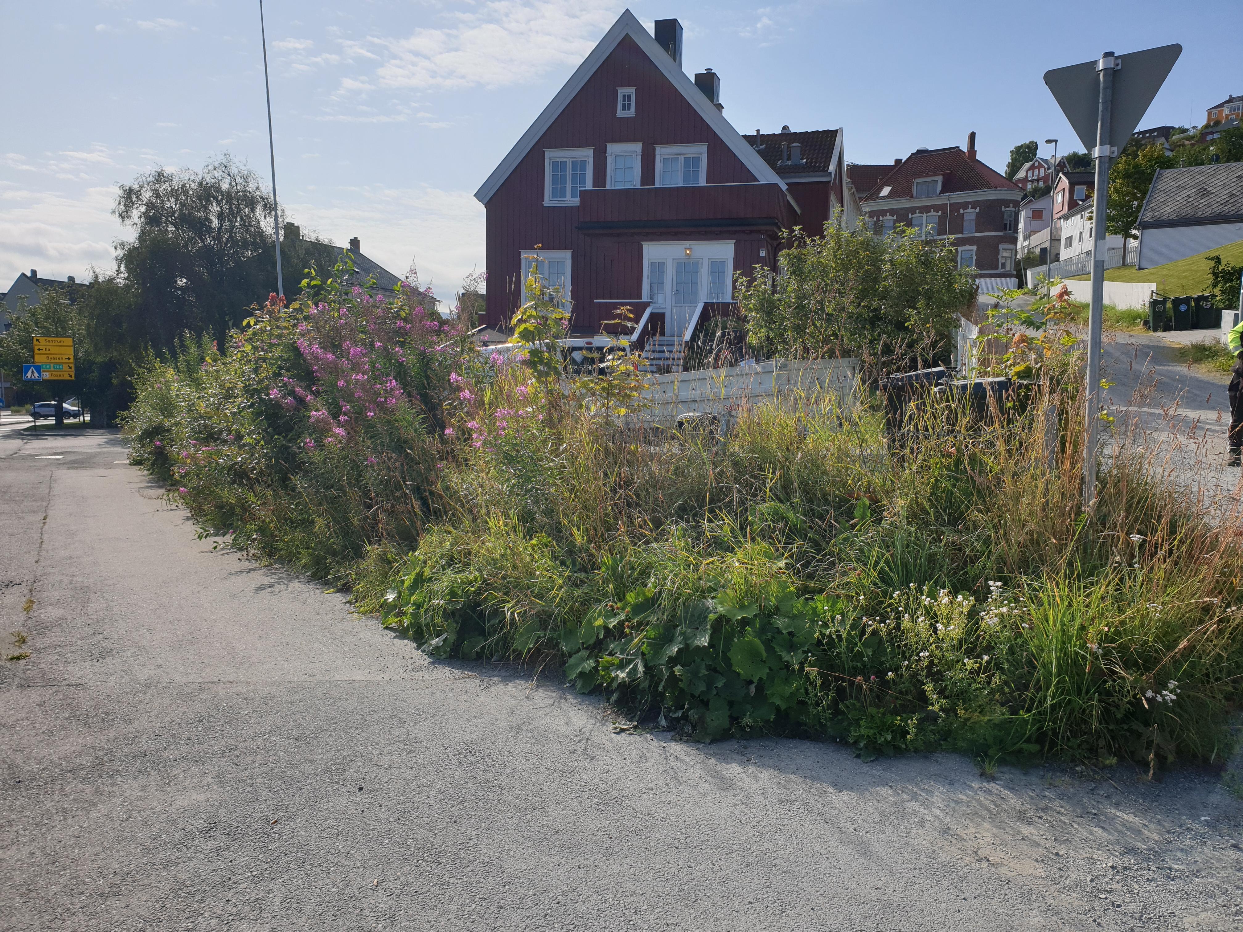 vedlikehold av hage før