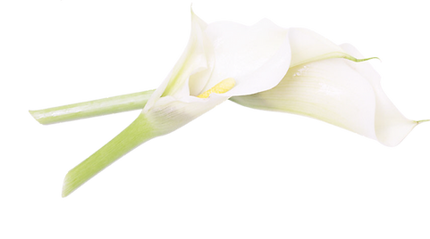 Kosmetik, Nagelstudio, Make-up, Enthaarung, Fruchsäure, Gesichtsbehandlung, Massage, Handpflege, Wimpern, Augenbrauen, Peeling, Pflege, Osnabrück,