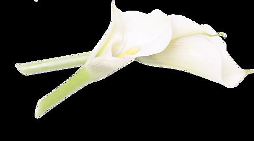 Kosmetik, Nagelstudio, Make-up, Enthaarung, Fruchsäure, Gesichtsbehandlung, Massage, Handpflege, Wimpern, Augenbrauen, Peeling, Pflege, Osnabrück