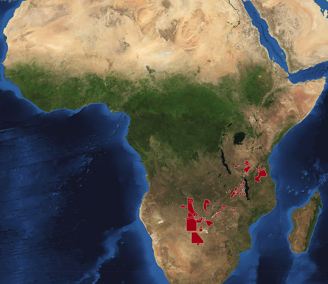 Africa-2010.jpg