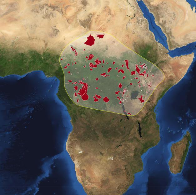Africa World Park (Congolian rainforest)