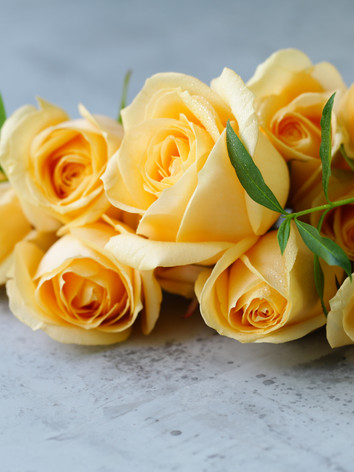 beautiful-orange-roses-9DCE4T6.jpg