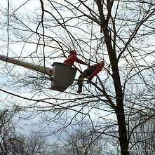 Aerial rescue training at Lindon Tree Service in Connecticut