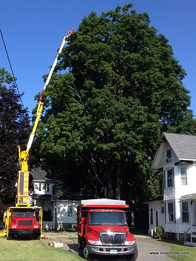 tree trimming and cabling