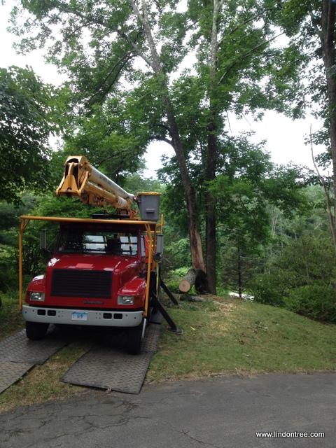 Storm damage split tree