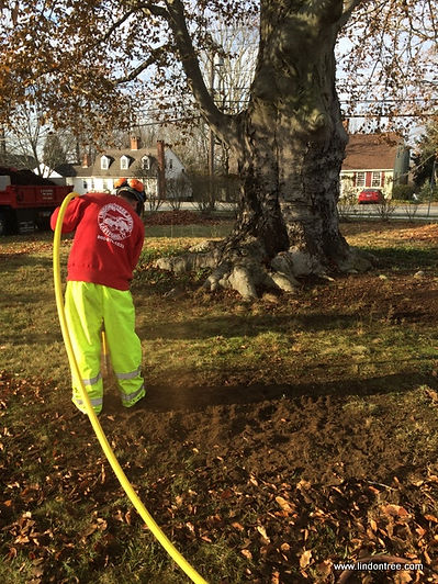 Arborist with AirSpade