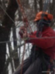 Arborist installing cabling support