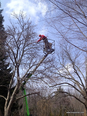 niftylift tree work