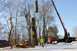 Tree removal using crane