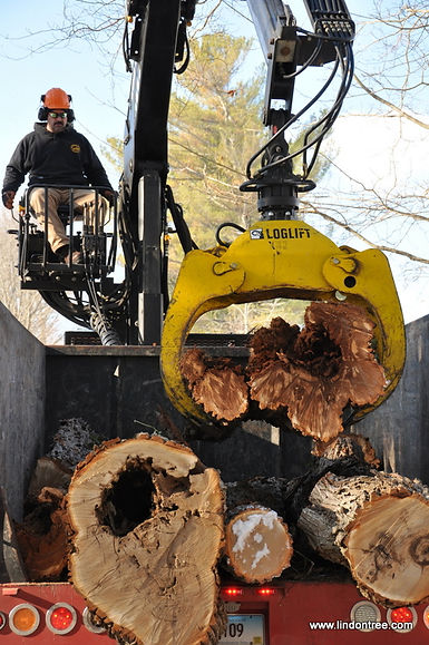 Owner Bill Bibeault Jr operating Lindon's log truck