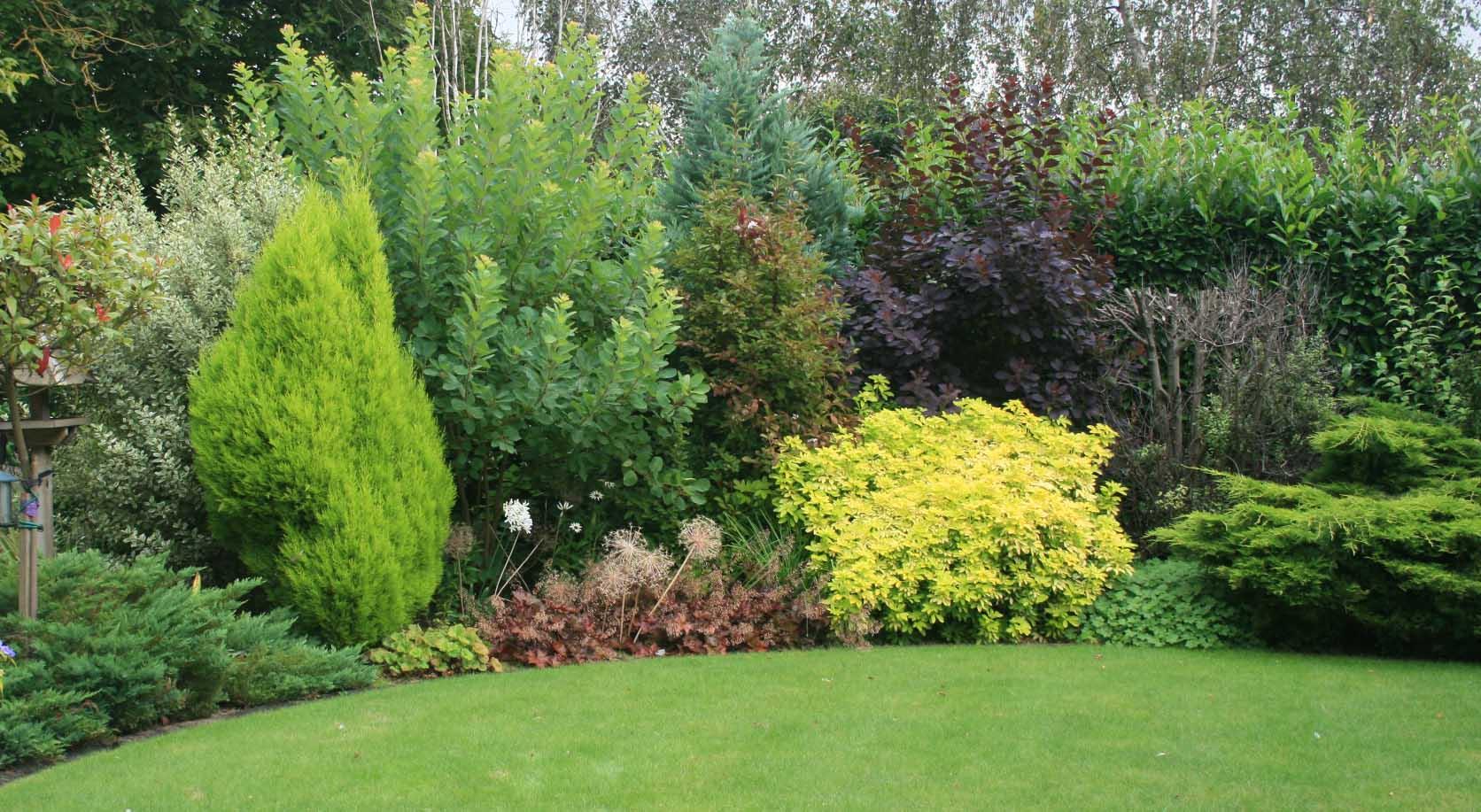 Mixed shrubbery border