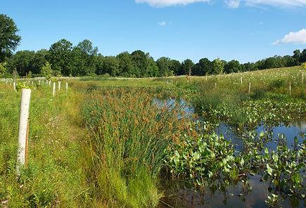 Wetland Mitigation Monitoring Western NY