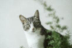 pexels-alice-castro-3333541.jpg