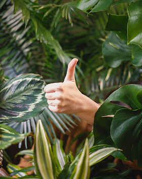home jungle_edited.jpg