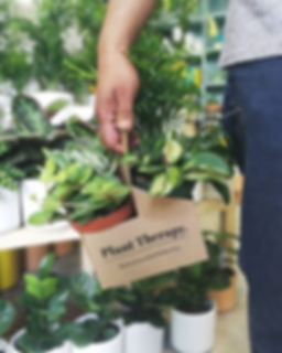 Hey Vancouver, meet Plant Therapy's Plan