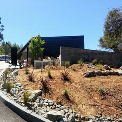 Los Gatos  California Modern Landscape Progress 4