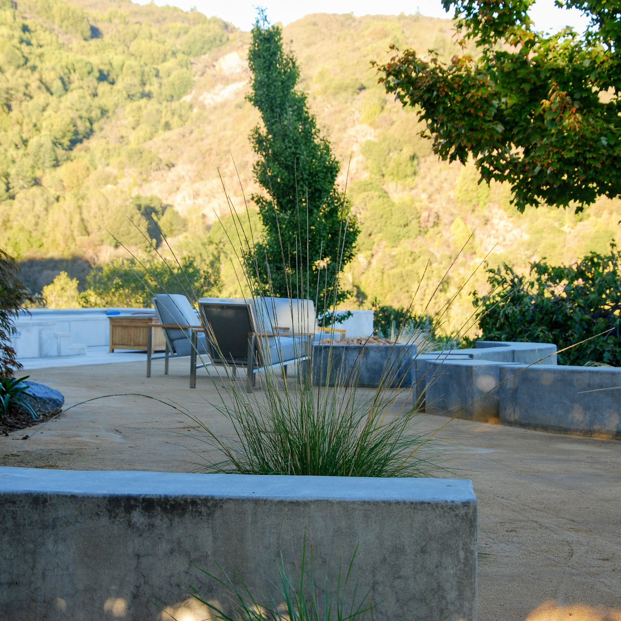 Los Gatos Modern Landscape After