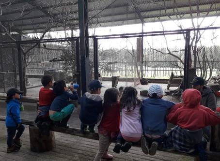 Salida pedagógica de Casa de Niños a la Senda Romahue