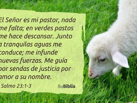 Carta catequesis Buen Pastor