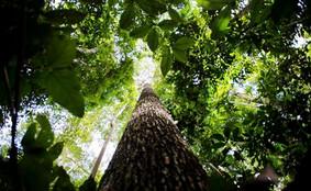 Maioria dos brasileiros está insatisfeita com preservação da Amazônia