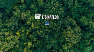 Acesso indisponível aos sistemas DOF e Sinaflor de 22 a 25/08 Os serviços deverão ser normalizados n