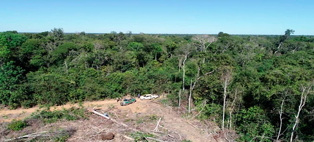 Projeto quer que reflorestamento seja feito pela Femarh; atualmente é feito por empresas — Foto: Ibama/Divulgação