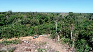 Aprovado projeto que prevê reposição florestal feita pela Fundação do Meio Ambiente de Roraima