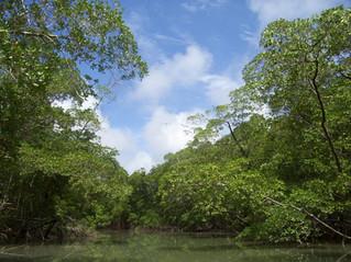 Brasil e EUA articulam criação de Fundo  para Amazônia