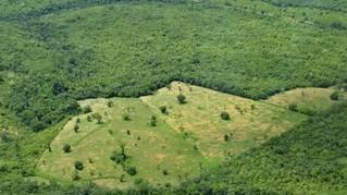 MPF vai à justiça para Incra cumprir compromissos contra desmatamentos