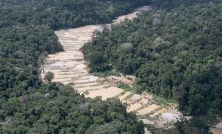Em julho, 73% do desmatamento para garimpo na Amazônia ocorreram em unidades de conservação e terras
