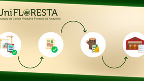 A importância do Documento de Origem Florestal (DOF)