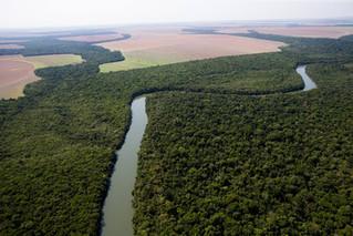 BNDES estuda modelo de concessão de florestas na Amazônia