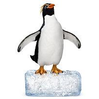 penguin_on_ice_1000.jpg