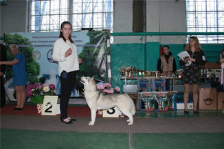 Победы Лирики  Чемпион России и РКФ
