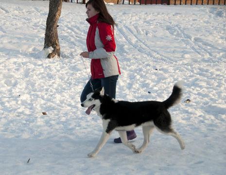 dogs_photo_karon_1