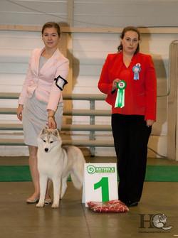 2014 specialty dog show ranking _Club Winner_, judge Natalya Milovanova